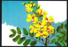MINT-40 Anos da Sociedade Botânica do Brasil - ( pau-brasil)