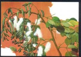 MINT-40 Anos da Sociedade Botânica do Brasil - Sábia da Caatinga (Mimosa)